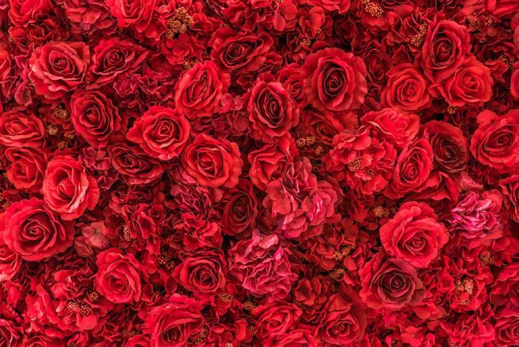 What is rose water toner and how can it revitalize your skin?