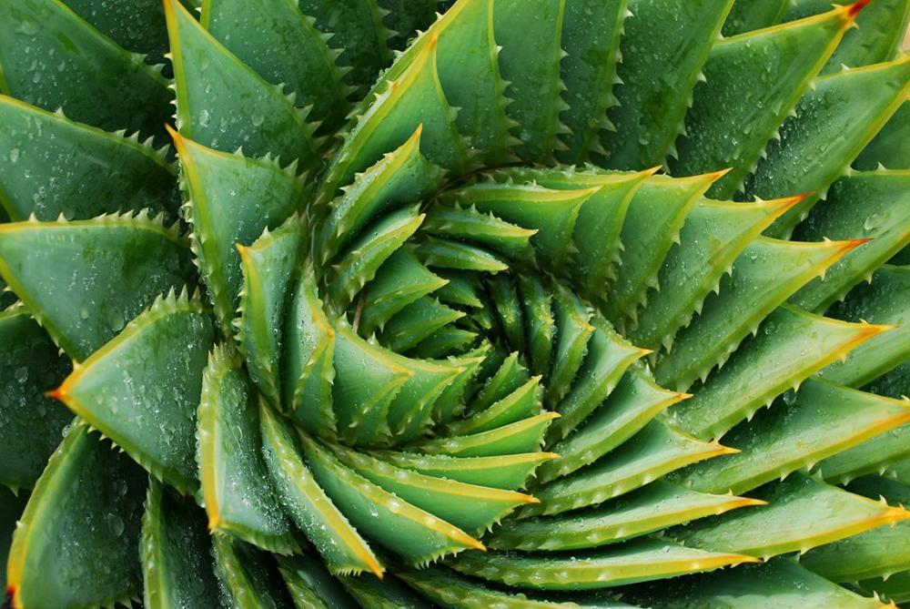 How Aloe Vera Gel Works