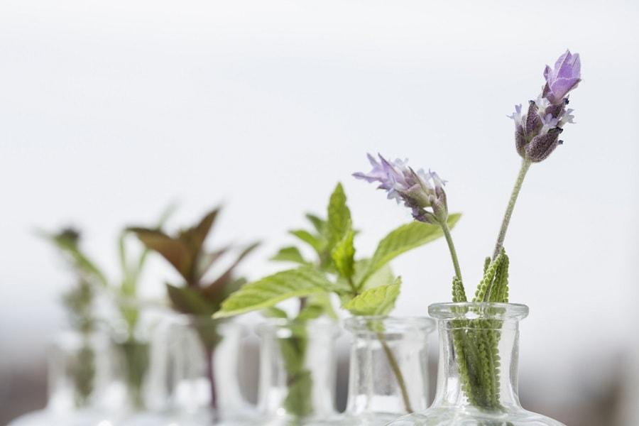 6 Uses for Essential Oils