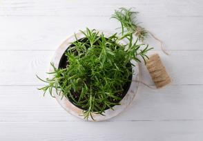 Rosemary Oil Benefits and Usage Tips