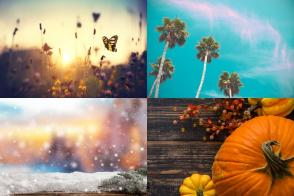 The Best Essential Oil Diffuser Blends for Every Season